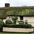 Thatched Cottage by Carla Parris