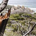 The Death Of A Tree V2 by Douglas Barnard