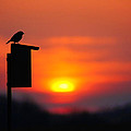 The Early Bird by Bill Pevlor