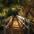 The Little White Bridge II  by Saija  Lehtonen