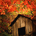 The Wood Shed  by Randall Branham