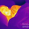 Thermogram Of A Sleeping Girl by Ted Kinsman