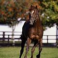 Thoroughbred Horse, Ireland by The Irish Image Collection