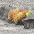 Tobacco Barn In Autumn by Smilin Eyes  Treasures