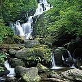 Torc Waterfall, Killarney National by Gareth McCormack