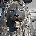 Trafalgar Square Lion by Andrew  Michael