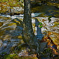 Tree And 3 Shadows by George Ramos
