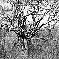 Tree by Steven Natanson