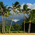 Tropical Beauty by Lynn Bauer