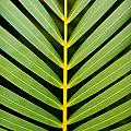 Tropical Palm Frond by MakenaStockMedia - Printscapes
