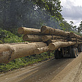 Truck With Timber From A Logging Area by Thomas Marent