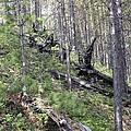 Tunguska Forest by Ria Novosti