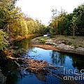 Twisted Creek by Sue Stefanowicz