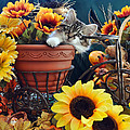 Venus - Cute Kitten In Bicycle Flower Planter - Kitty Cat In Sunflowers And Gerberas by Chantal PhotoPix