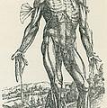 Vesalius De Humani Corporis Fabrica by Science Source