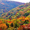 View Along The Highland Scenic Highway by Thomas R Fletcher