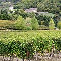 Vineyard by Jeremy Woodhouse
