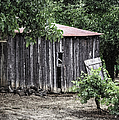 Watercolor Barn by Joan Carroll