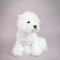 West Highland White Terrier by Waldek Dabrowski