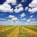 Wheat Farm Field At Harvest In Saskatchewan by Elena Elisseeva