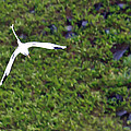 White-tailed Tropicbird by Artistic Photos