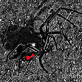 Wicked Widow - Selective Color by Al Powell Photography USA