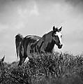 Wild Horse by Steve McKinzie