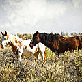 Wild Horses by Steve McKinzie