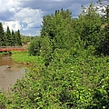 Wild Roses On Whitemud Creek by Jim Sauchyn