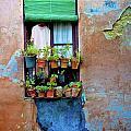 Window by Harry Spitz