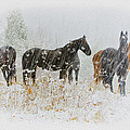 Winter Horses by Ron Jones