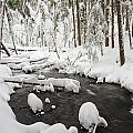 Winter Snow Along Still Creek In Mt by Craig Tuttle
