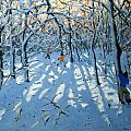 Winter Woodland Near Newhaven Derbyshire by Andrew Macara