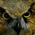 Wise Old Owl by LeeAnn McLaneGoetz McLaneGoetzStudioLLCcom