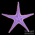X-ray Of Starfish by Ted Kinsman