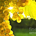 Yellow grapes by Elena Elisseeva