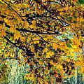 Yellow Leaves by John Herzog