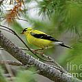 Yellow by Rick  Monyahan