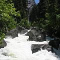 Yosemite National Park 2011 by Diane Greco-Lesser