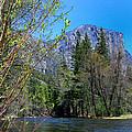 Yosemite by Rima Biswas