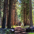 Yosemite Trail by Stephen Campbell