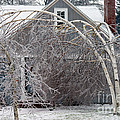 Ice Storm by Ted Kinsman