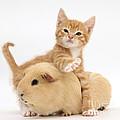 Kitten by Mark Taylor