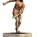 Male Musculature by Friedrich Saurer