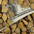 Money by Blink Images