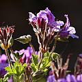 Wild Flowers by Manolis Tsantakis