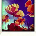 Field Of Poppies by Bernard Jaubert
