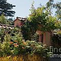 Gardens In Carmel Monastery by Carol Ailles