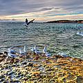 Point Peron Wa by Imagevixen Photography