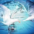 Seagulls by Debra  Miller